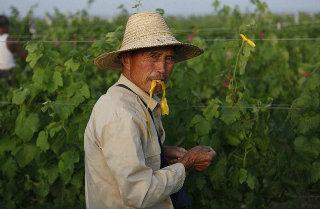 Poco vino per la Cina?
