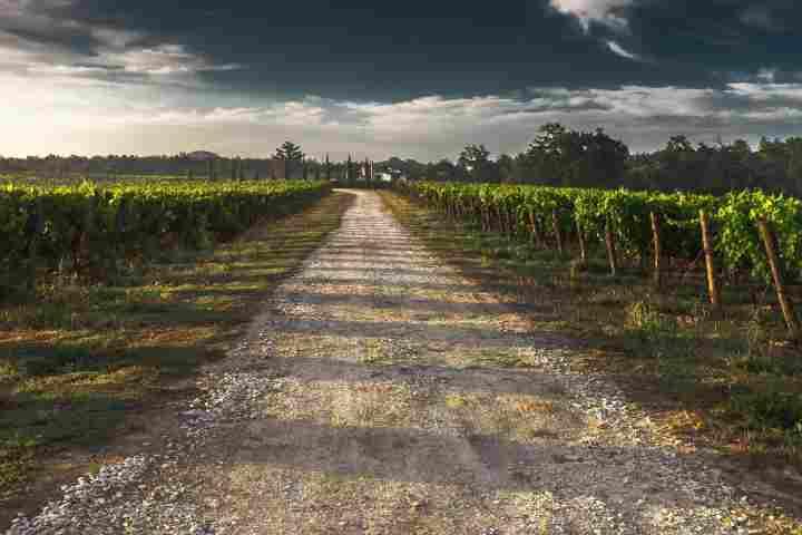 turismo del vino cantine aperte