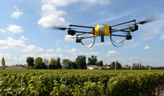 drone in vineyard