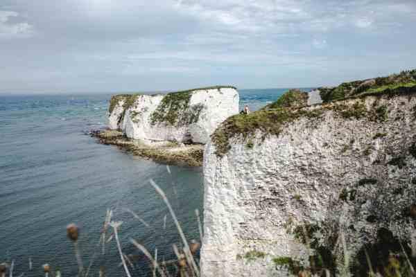 Nel Kent la più grande vigna del Regno Unito