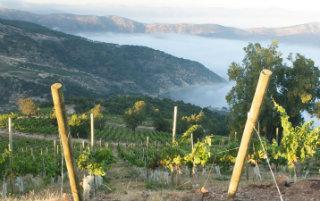 Il Cile del vino e del terremoto